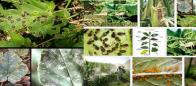 Listado de Plagas en el Perú